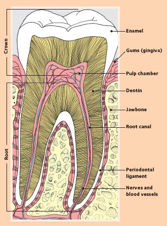 Dental Fillings in Jacksonville